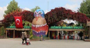 24570 310x165 - حديقة حيوانات غازي عنتاب الأكبر في تركيا