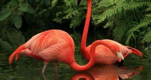zmir Bird Paradise1 310x165 - لعشاق التصوير .. جنة الطيور في أزمير