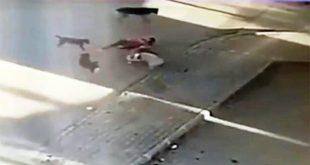 تركية تنقذ كلبها من بين أنياب الكلاب الضالة 310x165 - بالفيديو : امرأة تركية تغامر بحياتها و تنقذ كلبها من بين أنياب الكلاب الضالة