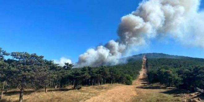في غابة بإسطنبول 660x330 - حريق كبير في غابة بولاية اسطنبول .. طائرة هليكوبتر تتدخل للسيطرة عليه